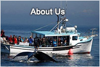 About Freeport Whale & Seabird Tours | Nova Scotia Whate Watching Tours