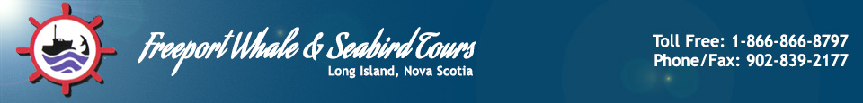 Nova Scotia Whale Watching Tours | Freeport Whale & Seabird Tours | Freeport, Nova Scotia