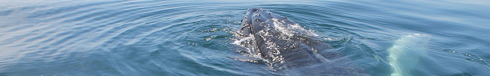 Freeport Whale & Seabird Tours | Nova Scotia Whale Watching Tours | Freeport, Nova Scotia
