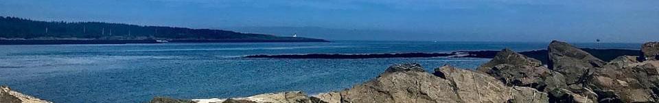 Freeport Whale & Seabird Tours | Nova Scotia Whale Watching Tours | Freeport, Nova Scotia