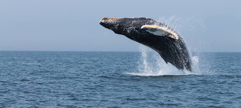 Best Whale Watching Tours In Nova Scotia
